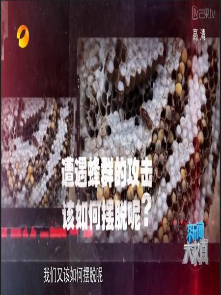湖南卫视新闻大求真20151126期