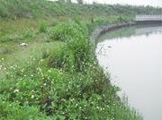 广州香雪公园天窿河